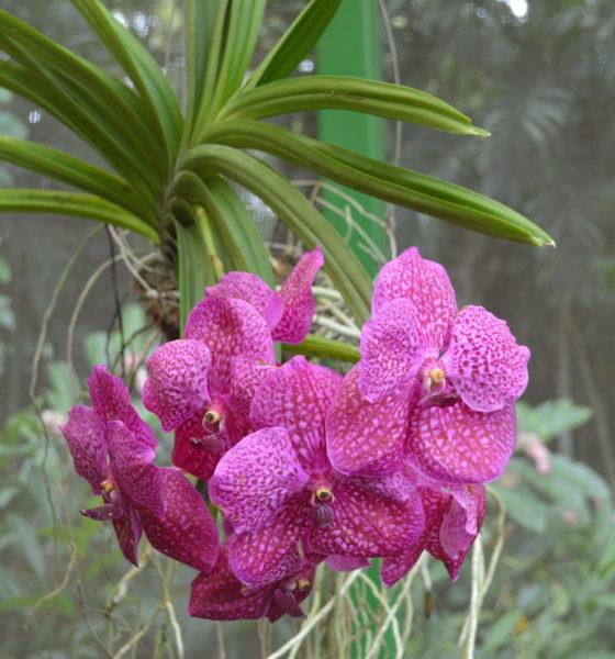 Maravilloso Jardin Bótanico de Orquideas